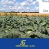Internetplattform bringt Landwirte und Erntehelfer zusammen