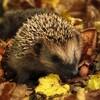 Herbstlaub - Biotonne, Säcke oder als Lebensraum vieler Lebewesen