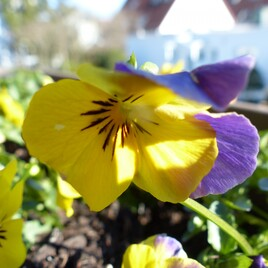 Frühjahrsangebpt