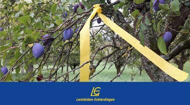 """Ernteprojekt """"Gelbes Band"""": Bäume frei zum Abernten"""