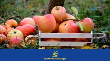 Obstannahme für den LE Streuobstwiesensaft   Äpfel und Birnen