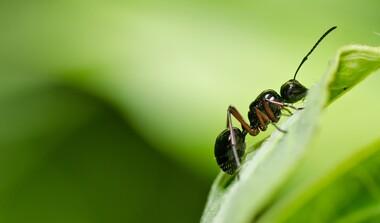 Im März ist Saisonstart für Ameisen, sie gehen auf Nahrungssuche und vergrößern ihren Staat