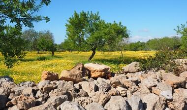 Vortrag: Die Geschichte des Olivenanbaus im Mittelmeerraum - von der Antike bis huete