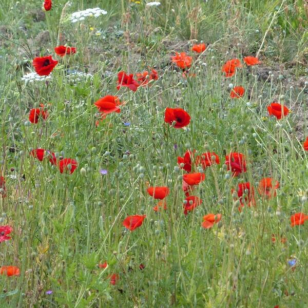 Pollenflug, Frühblüher