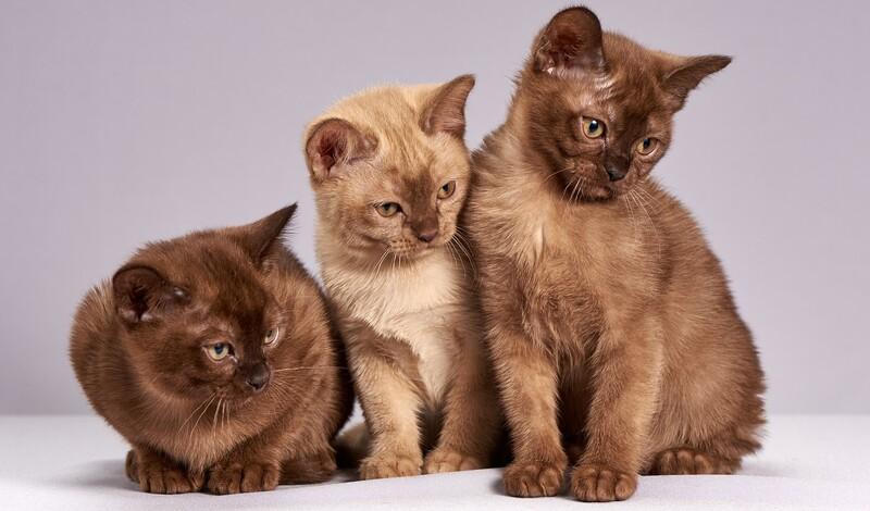 Vortrag: Ernährung von Katzen