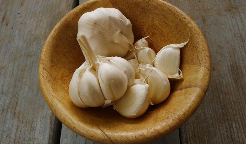 Pflanze des Monats September: Knoblauch