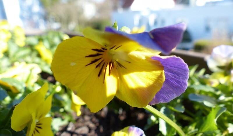 Frühjahrskur stärkt Ihr Immunsystem