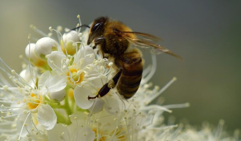 """Infoabend """"Bienensterben – was können wir tun"""""""